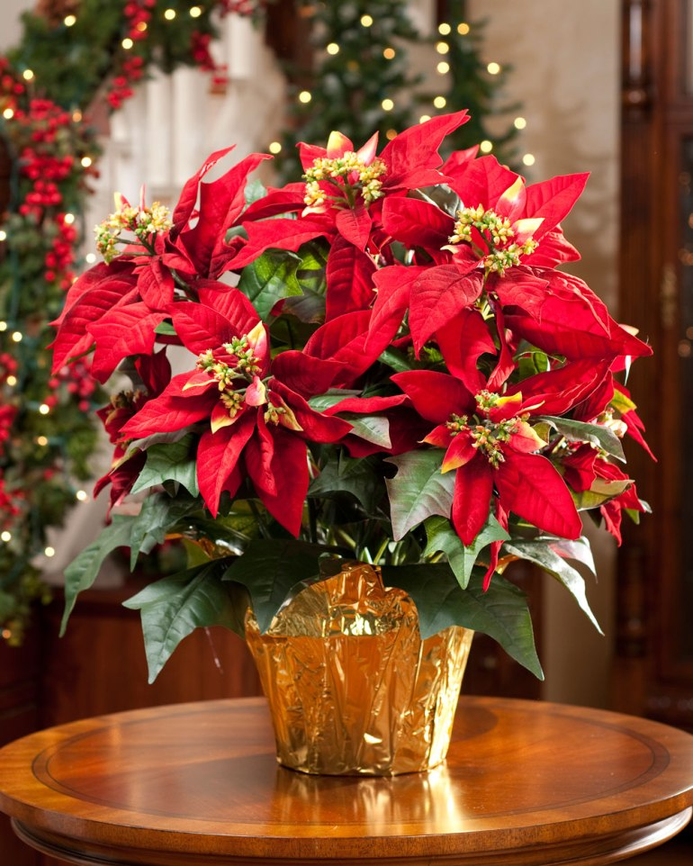Large Premier Silk Poinsettia Plant to Decorate Christmas Day